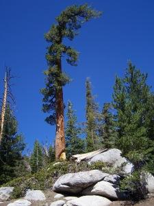High Sierra Blue Sky 2013.